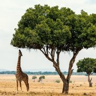 Kenya Private Expedition