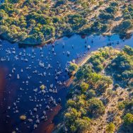 Botswana Private Expedition