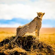 Tanzania Photo Safari - National Geographic Expeditions