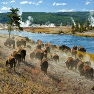 Winter in Yellowstone Photo Expedition