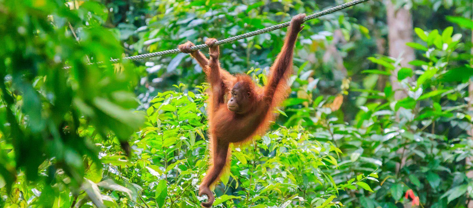 Borneo Wildlife Adventure