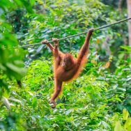 Borneo Wildlife Adventure - National Geographic Expeditions
