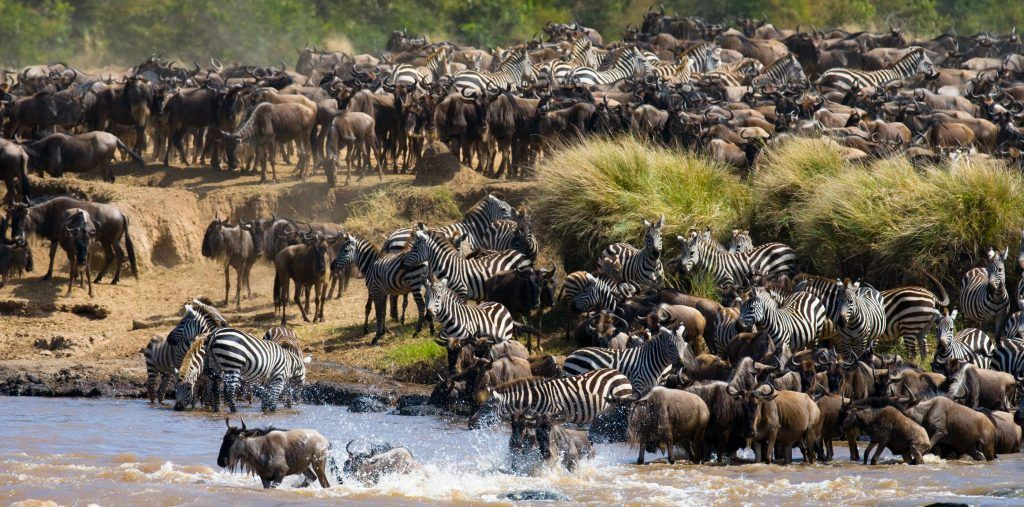 Tanzania's, Great Migration