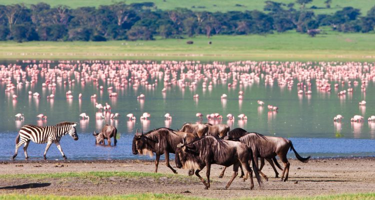 Tanzania National Geographic Expeditions