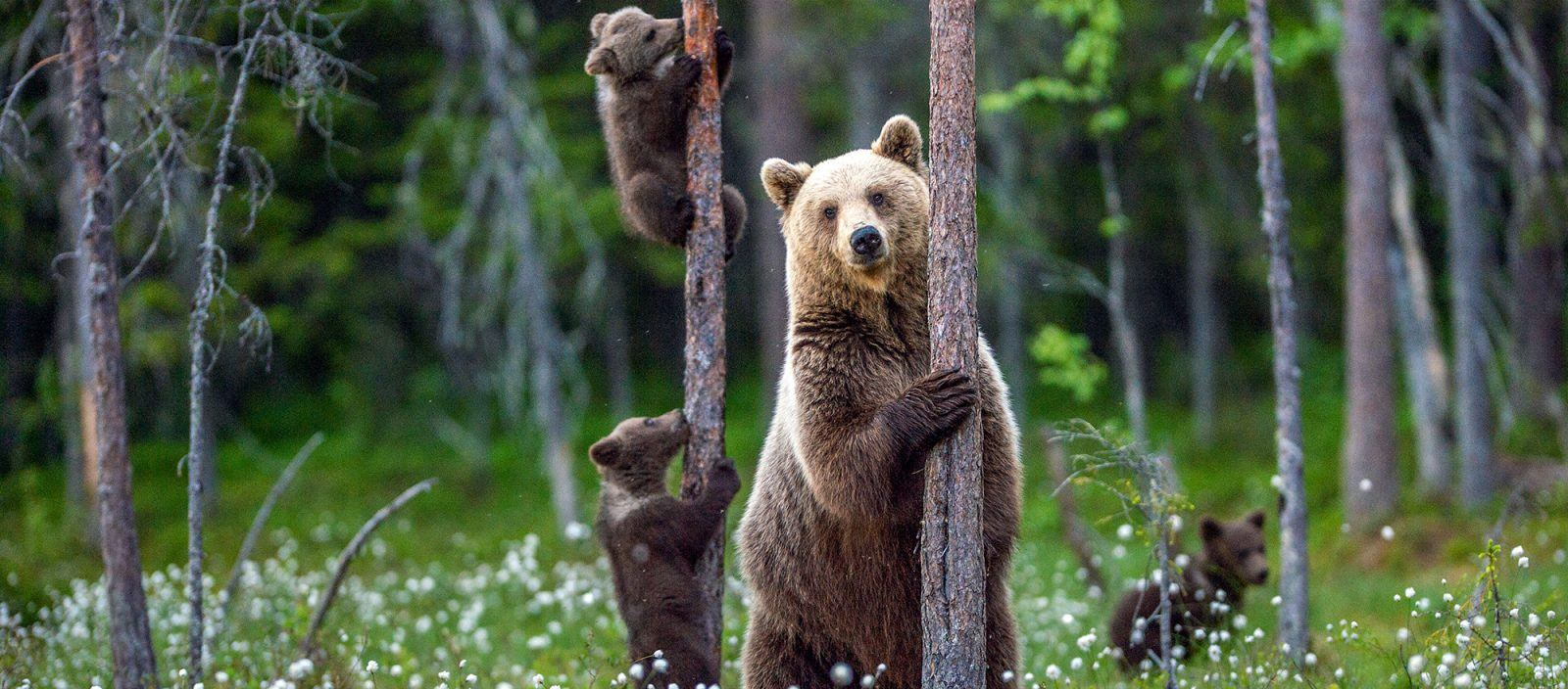 Earth Day | Grizzly Bear