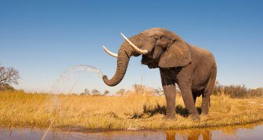 Earth Day | African Elephant